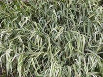 Φυσικό υπόβαθρο του πράσινου φύλλου Στοκ Εικόνες