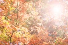 Φυσικό υπόβαθρο φθινοπώρου Στοκ φωτογραφίες με δικαίωμα ελεύθερης χρήσης