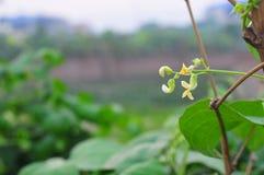 Φυσικό φύλλο λουλουδιών χλόης τοπίου Στοκ Εικόνα