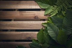 Φυσικό φύλλωμα των φύλλων με το ξύλινο διάστημα αντιγράφων για το κείμενο Στοκ εικόνες με δικαίωμα ελεύθερης χρήσης