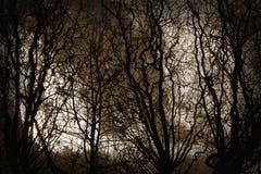 Φυσικό χάος Στοκ Φωτογραφία