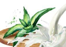 Φυσικό aloe Βέρα και παφλασμός γιαουρτιού Συρμένη χέρι απεικόνιση Watercolor Απεικόνιση αποθεμάτων