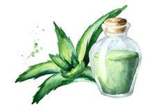 Φυσικό aloe ουσιαστικό πετρέλαιο της Βέρα Συρμένη χέρι απεικόνιση Watercolor Ελεύθερη απεικόνιση δικαιώματος