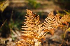 Φυσικό floral υπόβαθρο φτερών στον ήλιο Στοκ Φωτογραφίες