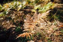Φυσικό floral υπόβαθρο φτερών στον ήλιο Στοκ Εικόνες