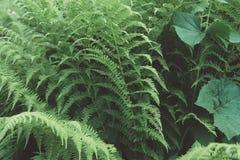 Φυσικό floral υπόβαθρο φυλλώματος φύλλων φτερών μεγάλο πράσινο στοκ φωτογραφίες