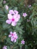 Φυσικό PIC των λουλουδιών Στοκ εικόνες με δικαίωμα ελεύθερης χρήσης