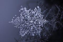 Φυσικό snowflake κρύσταλλο στο σκοτεινό υπόβαθρο Στοκ Εικόνες