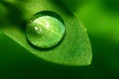 φυσικό waterdrop Στοκ εικόνες με δικαίωμα ελεύθερης χρήσης
