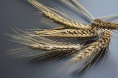 Φυσικό wheatear υπόβαθρο Στοκ εικόνα με δικαίωμα ελεύθερης χρήσης