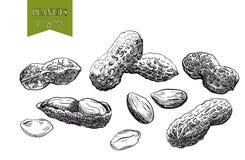 Φυστίκια Στοκ Εικόνες