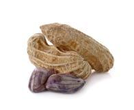 Φυστίκι, καρύδι, goober, αραχίδα, πίθηκος-καρύδι που απομονώνεται Στοκ φωτογραφία με δικαίωμα ελεύθερης χρήσης