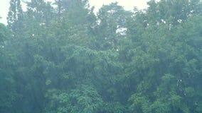 Φυσώντας δέντρα αέρα θύελλας απόθεμα βίντεο