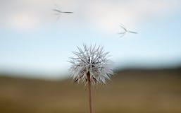 φυσώντας αέρας Στοκ εικόνα με δικαίωμα ελεύθερης χρήσης