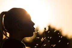 Φυσώντας γύρη πικραλίδων Στοκ Εικόνες