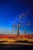 φυσώντας δέντρο Στοκ Εικόνες