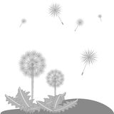 φυσώντας μίσχος σπόρων πικραλίδων Στοκ Εικόνα