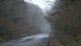 Φυσώντας ομίχλη αέρα μέσω των δέντρων SF απόθεμα βίντεο