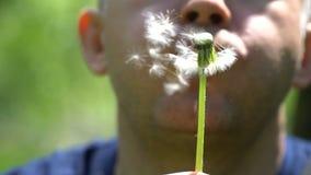 Φυσώντας πικραλίδα νεαρών άνδρων στο θερινό τομέα απόθεμα βίντεο