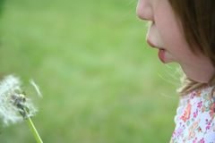 φυσώντας σπόρος πικραλίδων Στοκ φωτογραφία με δικαίωμα ελεύθερης χρήσης