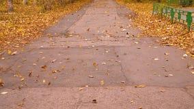 Φυσώντας φύλλα φθινοπώρου αέρα στην πορεία στο πάρκο πόλεων σε αργή κίνηση Πτώση φύλλων φθινοπώρου απόθεμα βίντεο