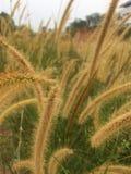 φυτά άγνωστα στοκ φωτογραφίες