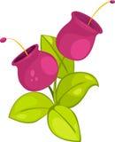 φυτά απεικόνισης λουλουδιών Στοκ Φωτογραφίες
