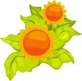 φυτά απεικόνισης λουλουδιών Στοκ φωτογραφία με δικαίωμα ελεύθερης χρήσης