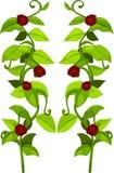 φυτά απεικόνισης λουλουδιών Στοκ Εικόνες