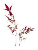φυτά εικόνων Στοκ Εικόνες