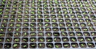 φυτά θερμοκηπίων στοκ εικόνα με δικαίωμα ελεύθερης χρήσης