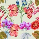 φυτά κήπων λουλουδιών ανασκόπησης phloxes πρότυπο άνευ ραφής Στοκ Εικόνες