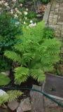 φυτά κήπων Στοκ εικόνα με δικαίωμα ελεύθερης χρήσης
