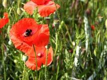 Φυτά και λουλούδια Στοκ Εικόνες