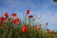 Φυτά και λουλούδια Στοκ Φωτογραφίες