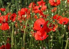 Φυτά και λουλούδια Στοκ εικόνα με δικαίωμα ελεύθερης χρήσης