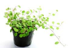 Φυτά καλωδίων στοκ εικόνες