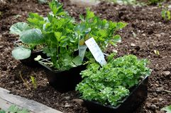 φυτά κλινοστρωμνής Στοκ εικόνα με δικαίωμα ελεύθερης χρήσης