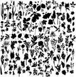 φυτά λουλουδιών Στοκ φωτογραφία με δικαίωμα ελεύθερης χρήσης