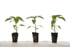 φυτά μικρά Στοκ Φωτογραφία