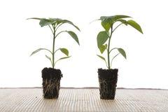 φυτά μικρά Στοκ Εικόνες