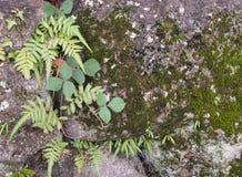φυτά μικρά Στοκ Εικόνα