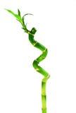 φυτά μπαμπού Στοκ φωτογραφία με δικαίωμα ελεύθερης χρήσης