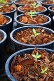 φυτά μωρών στοκ φωτογραφίες