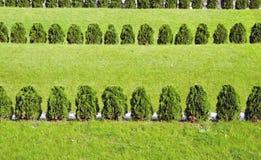 φυτά πάρκων πόλεων Στοκ Φωτογραφία