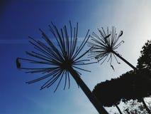 φυτά περίεργα Στοκ φωτογραφία με δικαίωμα ελεύθερης χρήσης