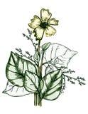 φυτά περιγραμματικά Στοκ Φωτογραφίες