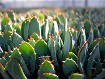 φυτά πρασινάδων Στοκ φωτογραφίες με δικαίωμα ελεύθερης χρήσης
