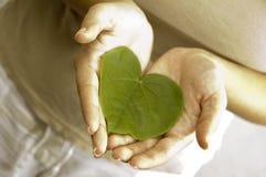 φυτά προσοχής Στοκ φωτογραφίες με δικαίωμα ελεύθερης χρήσης