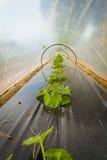 Φυτά σε ένα θερμοκήπιο στοκ εικόνα με δικαίωμα ελεύθερης χρήσης